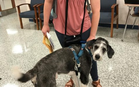 Seen here with 2018 graduate Makayla Hansen, Bauer the served as a therapy dog at the high school. File Photo