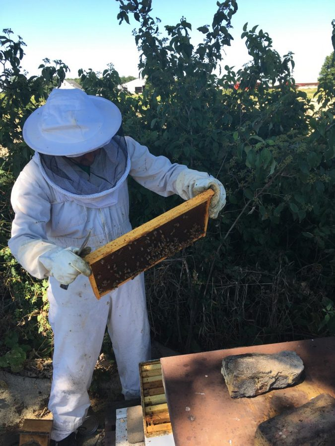 With a handful of bees, English teacher Jon Degitz keeps an apiary on his rural home. Photo courtesy of Mr. Degitz